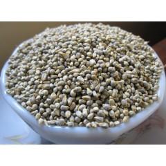 Pearl Millet (Kambu) 1kg